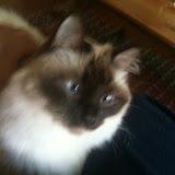 Catsitting Kosmo