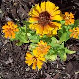 Gardening 2009 - 101_3837.JPG