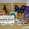 Montessori-Inspired Parts of an Insect