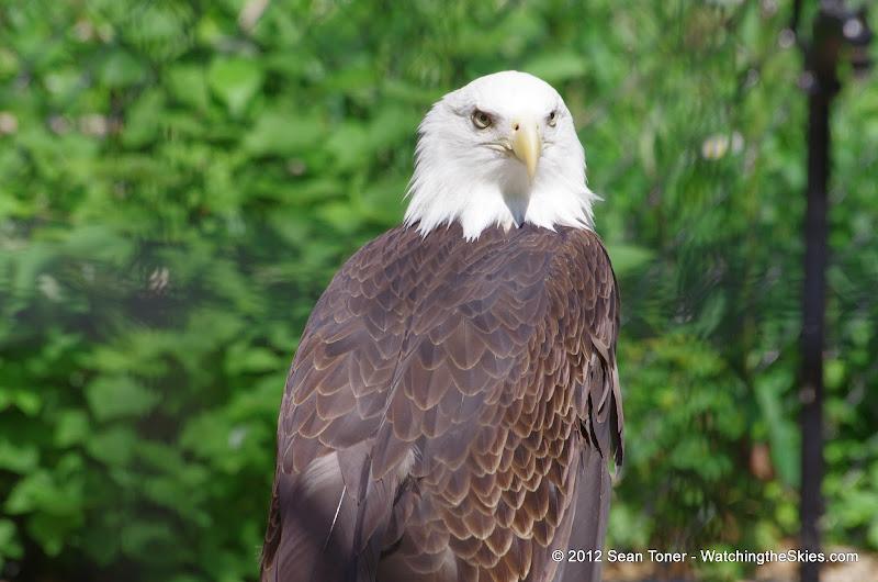 05-11-12 Wildlife Prairie State Park IL - IMGP1577.JPG