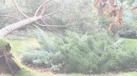 Protocolo de actuación en el Parque del Retiro ante emergencias meteorológicas