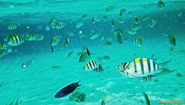 ngebolang-pulau-harapan-singletrip-nov-2013-pen-02