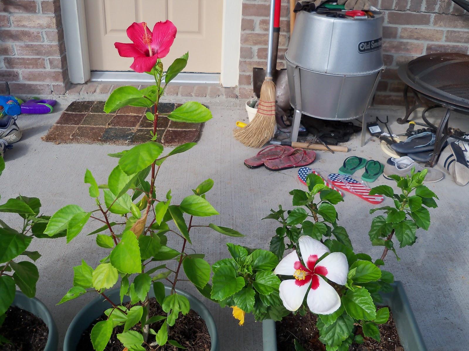 Gardening 2010, Part Three - 101_4949.JPG