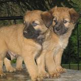 fotos caninas 304.jpg