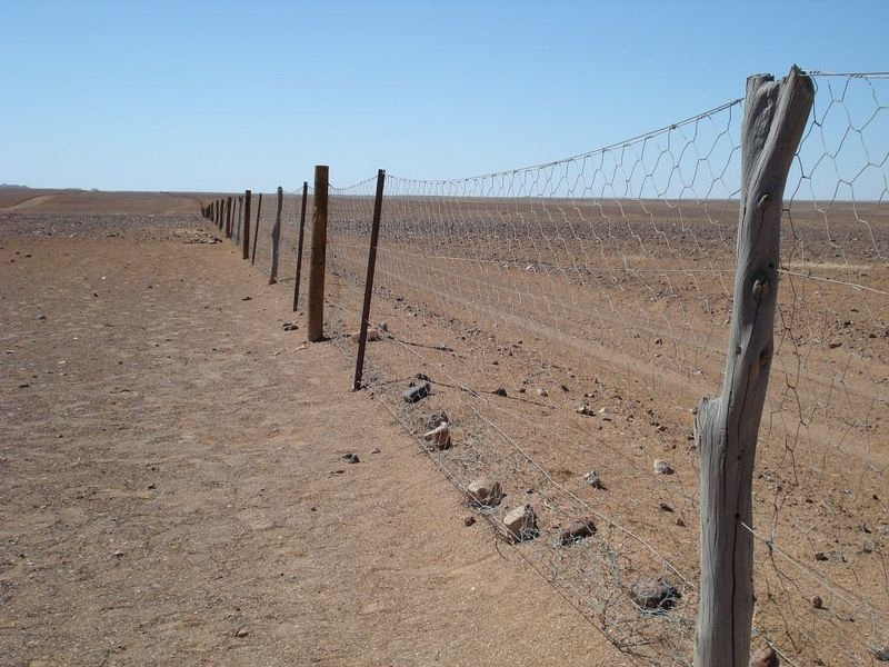 essay on the rabbit proof fence