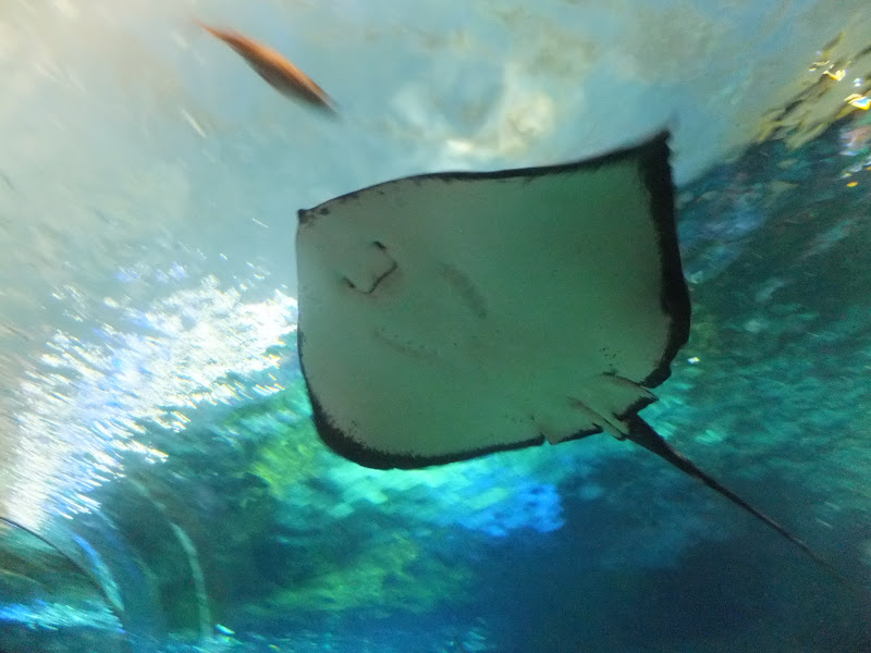 Ripley Aquarium, Toronto, Canada, Rays, elisaorigami, travel, blogger, voyages, lifestyle