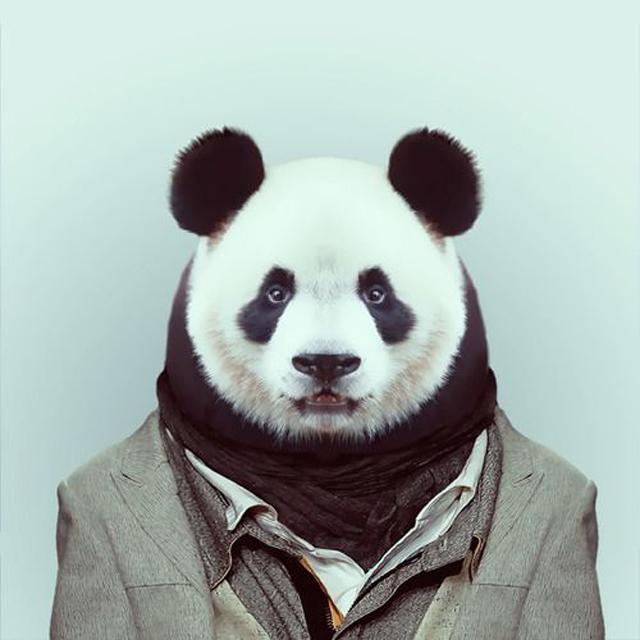 *Zoo Portraits動物時尚秀:正經八百時裝篇! 25
