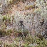 Camuflagem - Península Valdez, Argentina