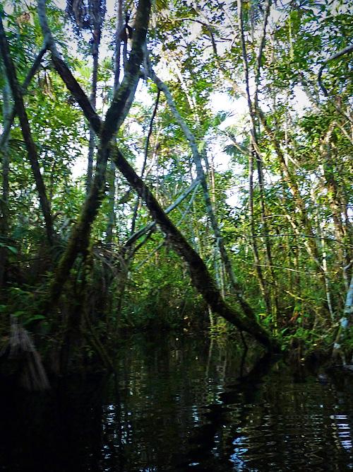 Orquidea Creek