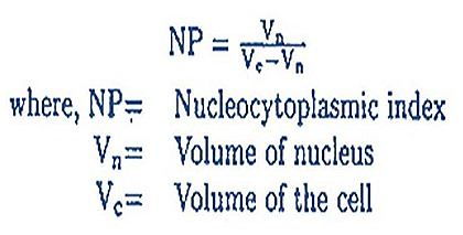 nucleas-cell-nucleoplasmic index (1)
