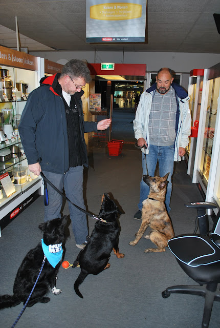 KNON-honden in Emmen - DSC_0805.JPG