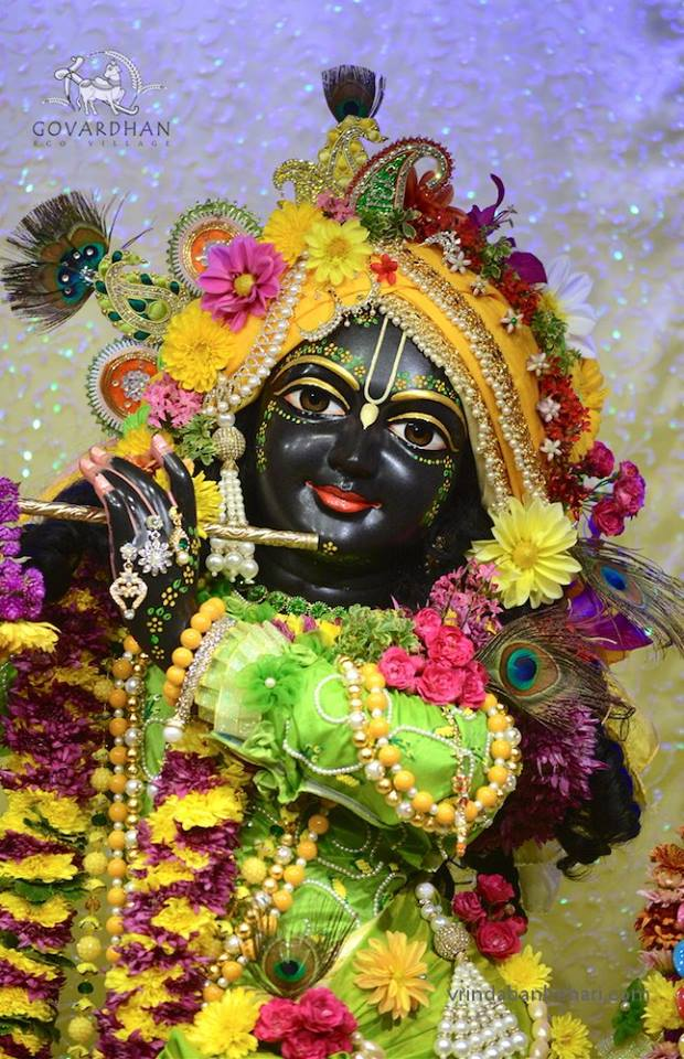 ISKCON GEV (Wada) Deity Darshan 31 Jan 2016 (10)