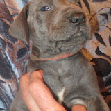 Finlayson boy @ 5 weeks