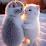 Riyankash Singh's profile photo