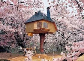 una casa de te sobre un cipres y entre cerezos