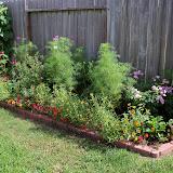 Gardening 2010, Part Three - 101_3662.JPG