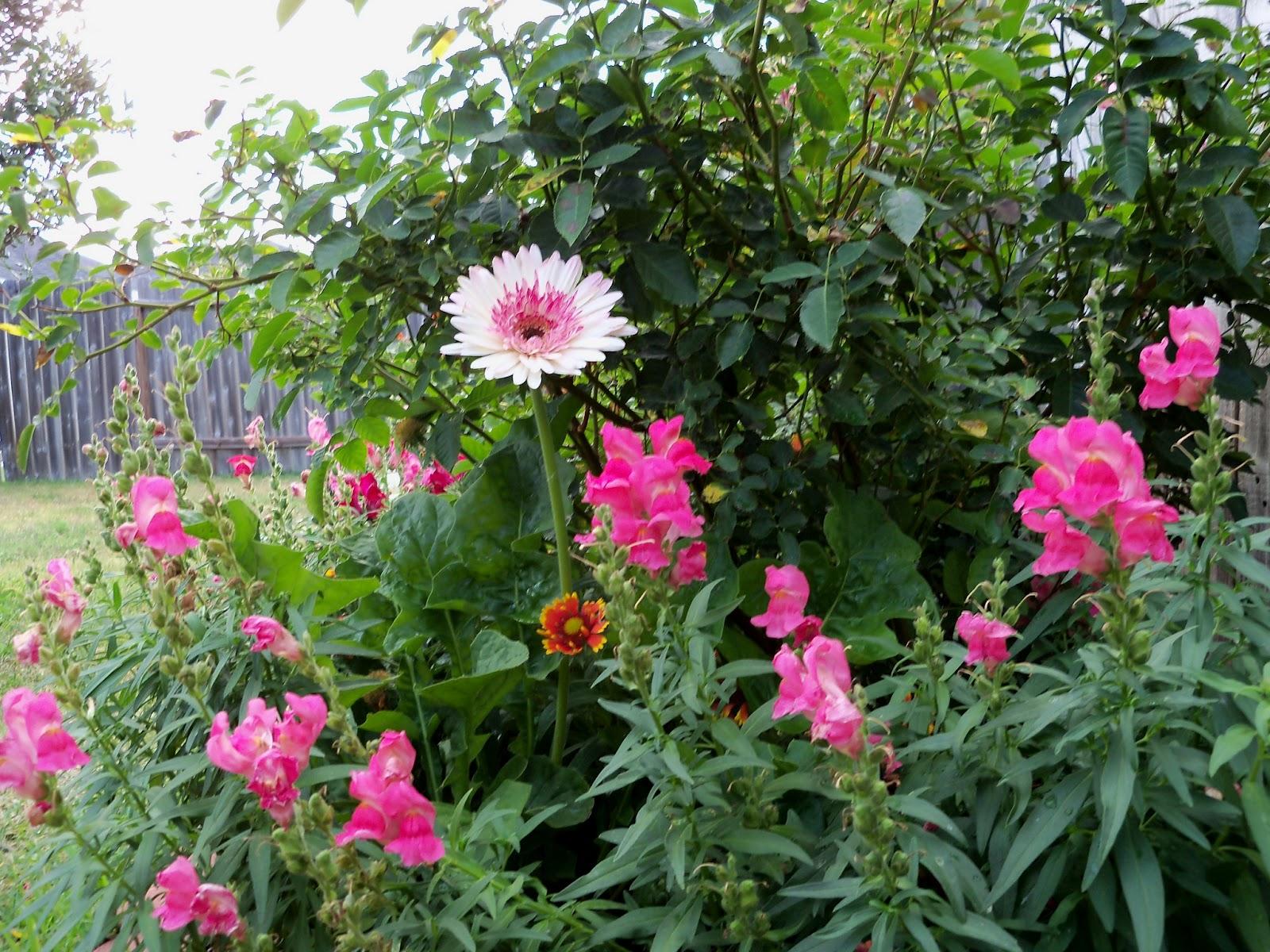 Gardening 2011 - 100_8842.JPG