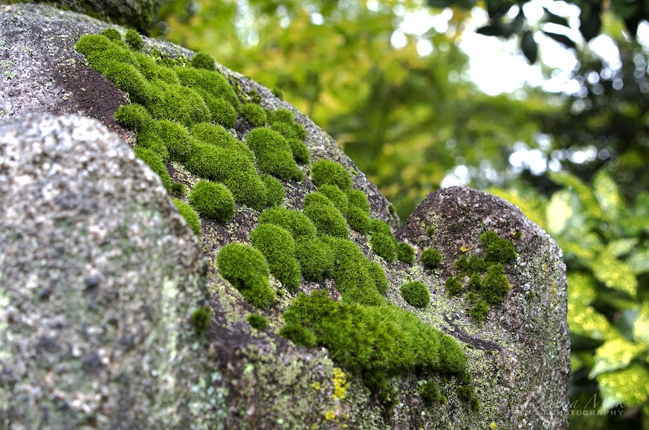 石雕上的苔蘚