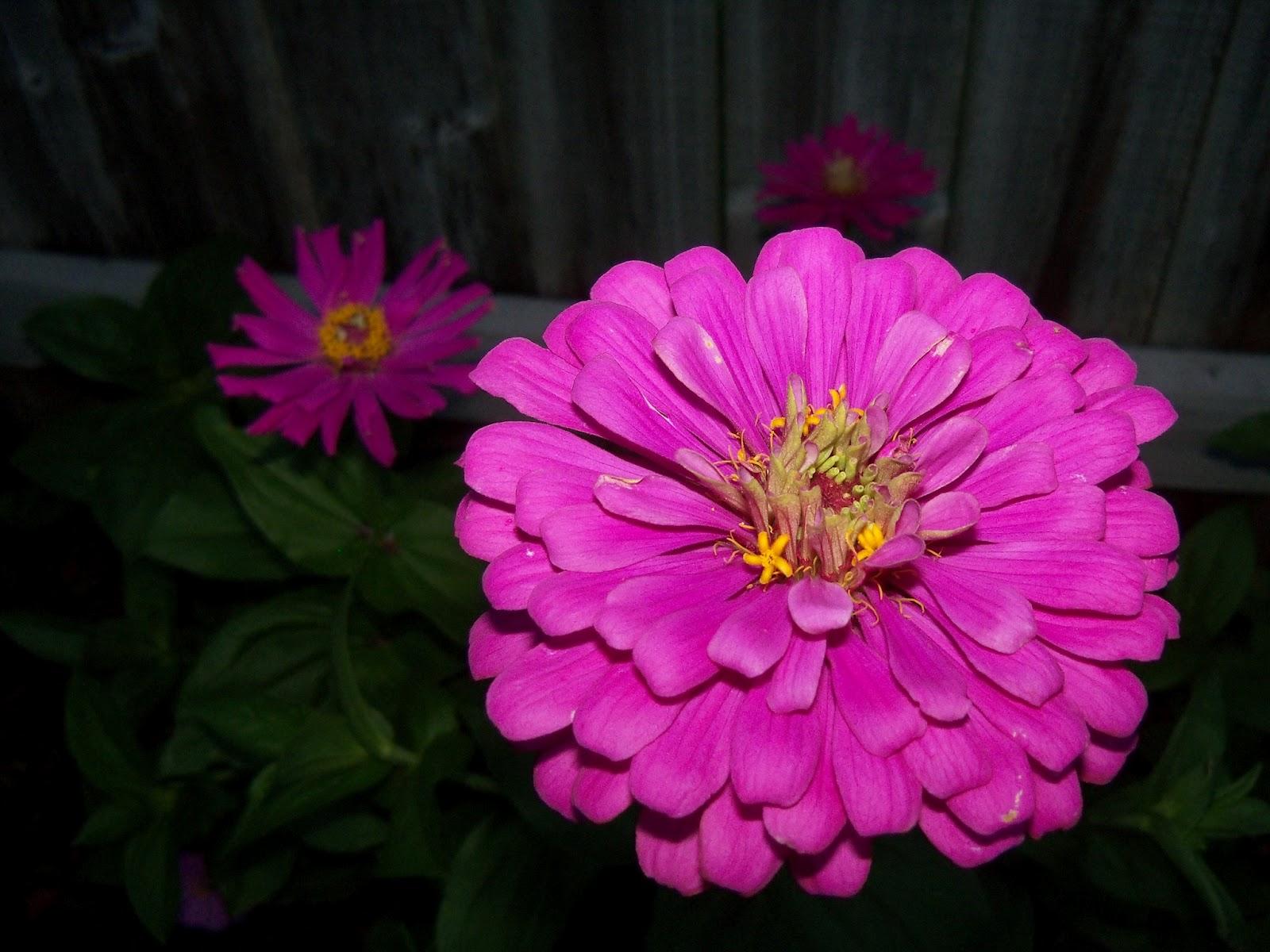 Gardening 2012 - 115_2093.JPG