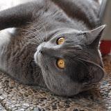 gatti 2012/6