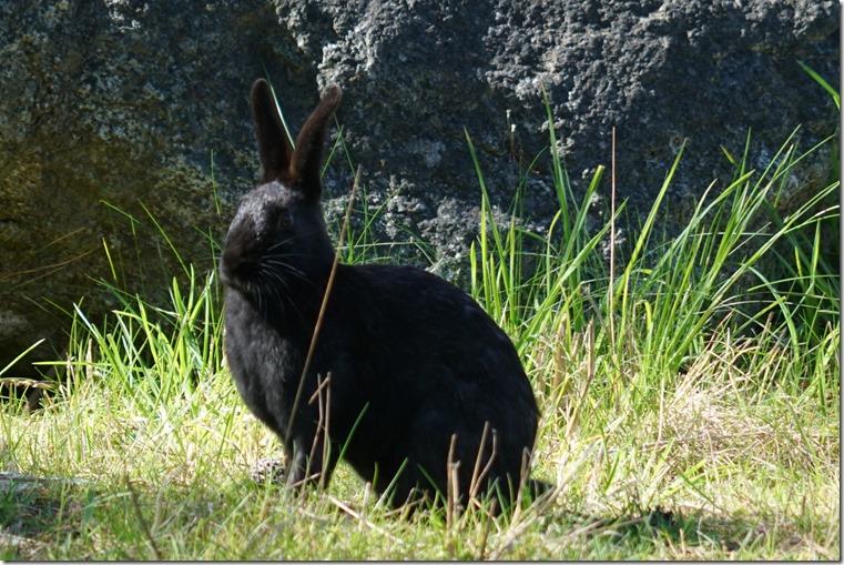 lopez black rabbit 042318 00000
