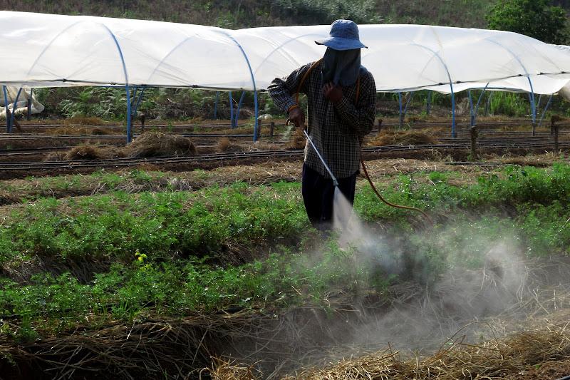 Jodi spraying the carrots