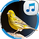 Download Canary Sounds For PC Windows and Mac