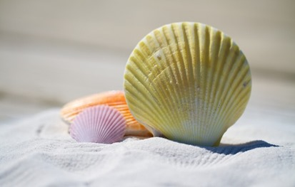Sea-Shell-Sand-Beach-HD-Wallpapers