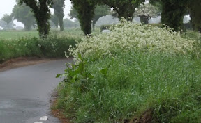 Grass giving 'grounds' for concern
