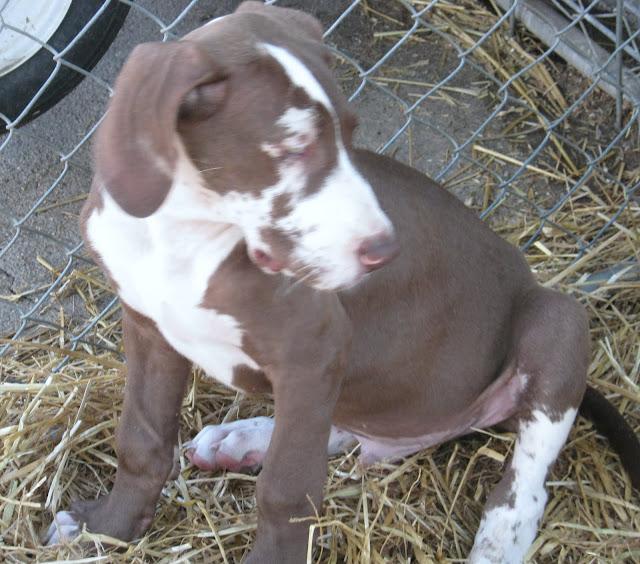 Jasper- born on 4/2/2010 - IMG_1457.JPG