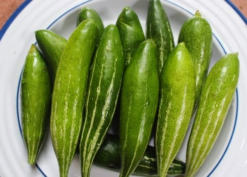 hạt giống muớp nhật