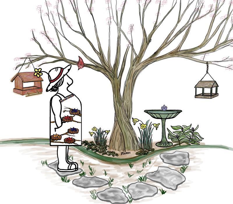 Dorris - watching her birds at the feeder and in the birdbath.