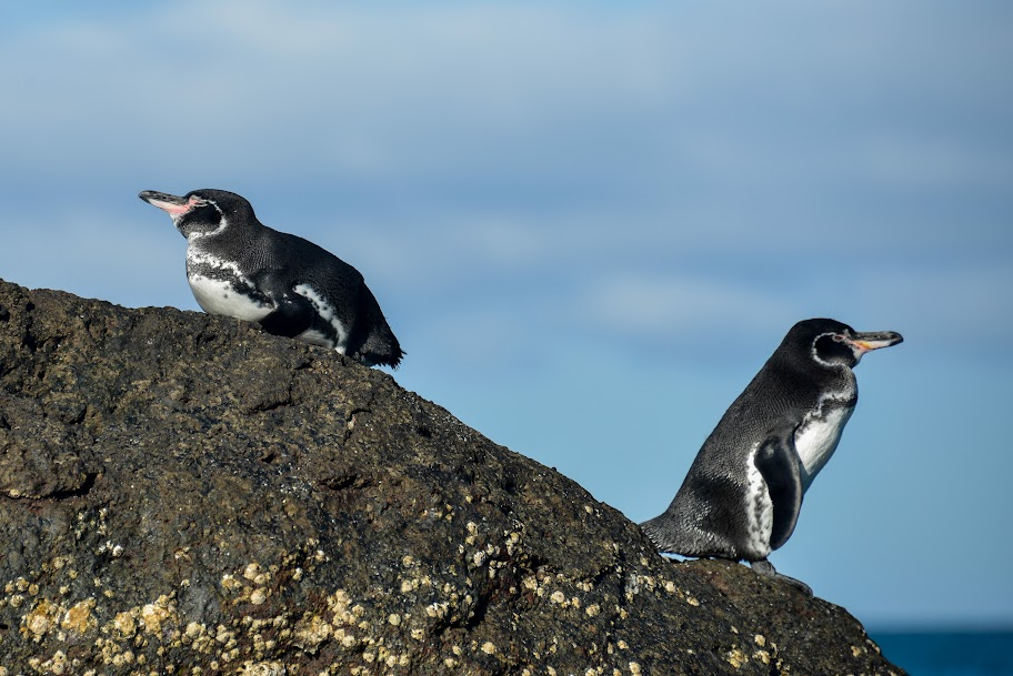 galapagos - Galapagos_FB-140.jpg