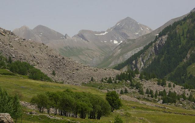 La vallée de l'Ubaye à Maljasset. Au pemier plan : biotope de Parnassius apollo provincialis, 9 juillet 2010. Photo : J.-M. Gayman