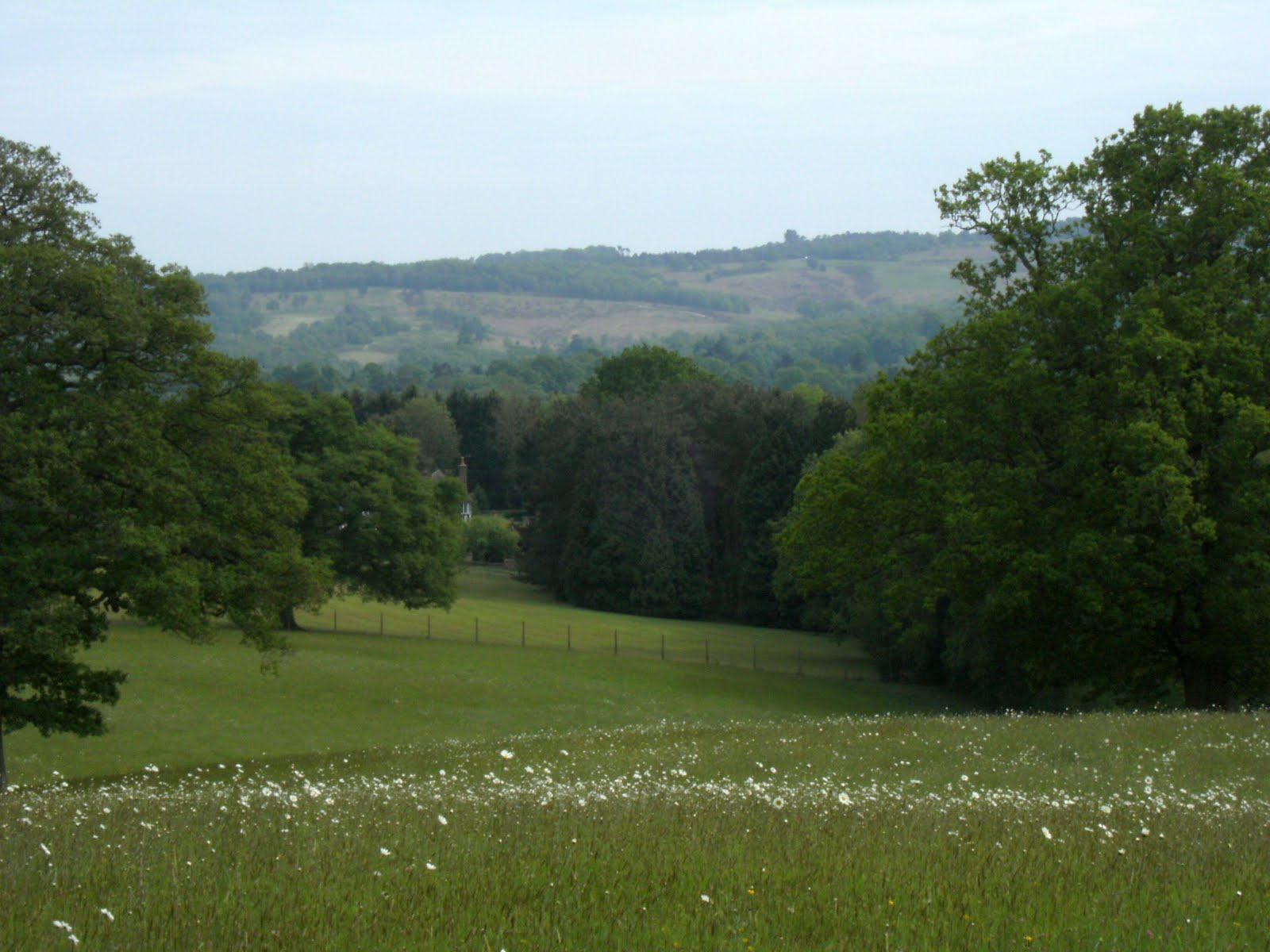 DSCF7818 Distant view of Ashdown Forest