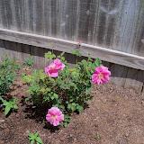 Gardening 2010 - 101_0701.JPG