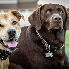 Best Friends by Wilson Silverthorne - Animals - Dogs Portraits ( dogs )