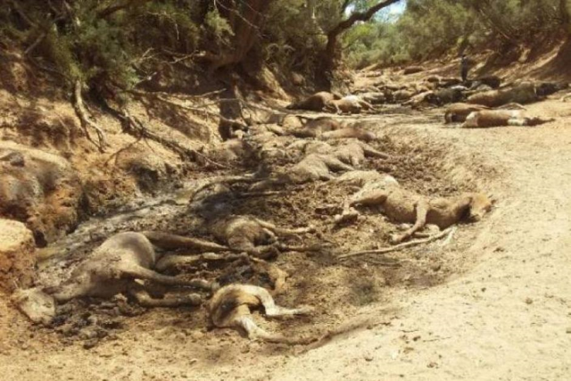 Photo showing the mass death of feral horses near Santa Teresa, Central Australia, 22 January 2019. The record-breaking heat wave and drought dried up their waterhole. Photo: Ralph Turner / Facebook