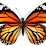 Reecie H's profile photo