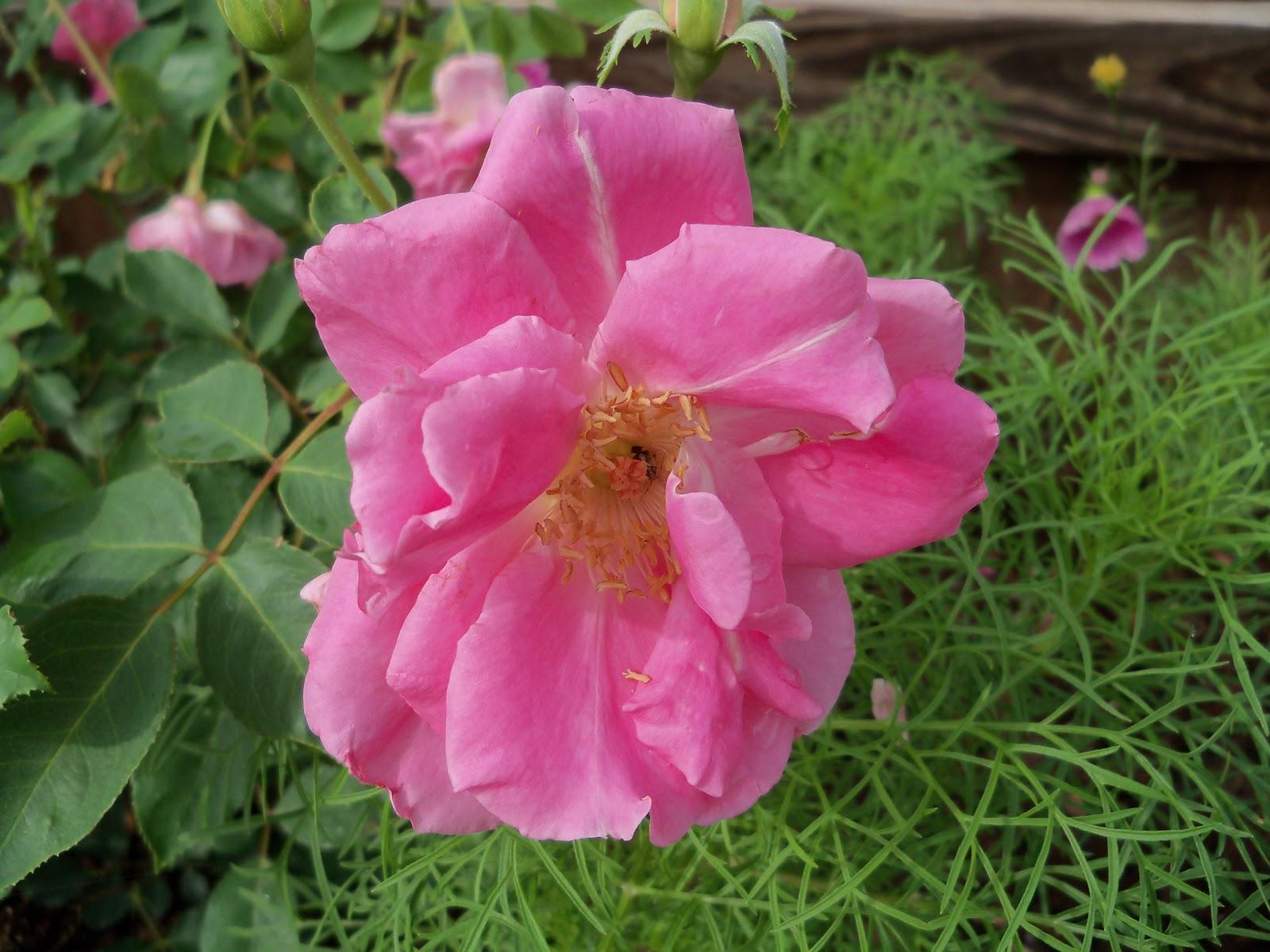 Gardening 2010, Part Two - 101_2178.JPG