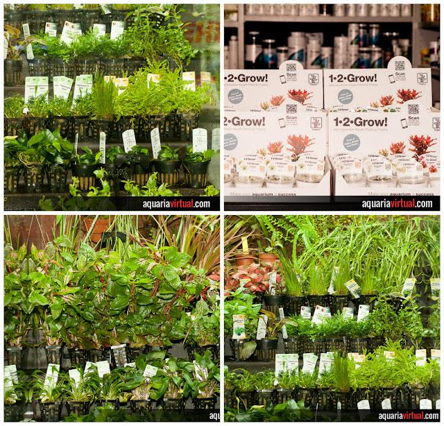 Collage Plantas Acuáticas