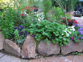 idée : massif en sphaigne. dans la sphaigne toutes sortes de plantes peuvent vivre ensemble un cactus et une plante aquatique peuvent vivre dans le même pot