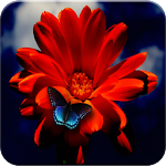 Flowers Wallpaper & Images Icon