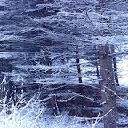 Зимняя уборка в Дендрарии 051.jpg