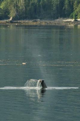 Whale 3.jpeg