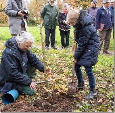 Planting the oak