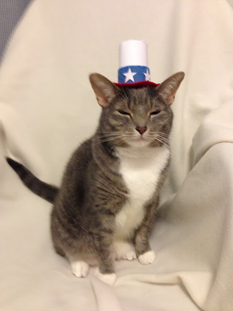 Forth of July Cat