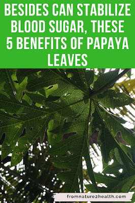 Benefits of Papaya Leaves for Cancer, Benefits of Papaya Leaves for Skin, Benefits of Papaya Leaves for Inflamation