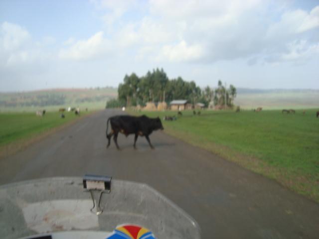 Etiópia de Metema a Moyale   Imagem%252520695