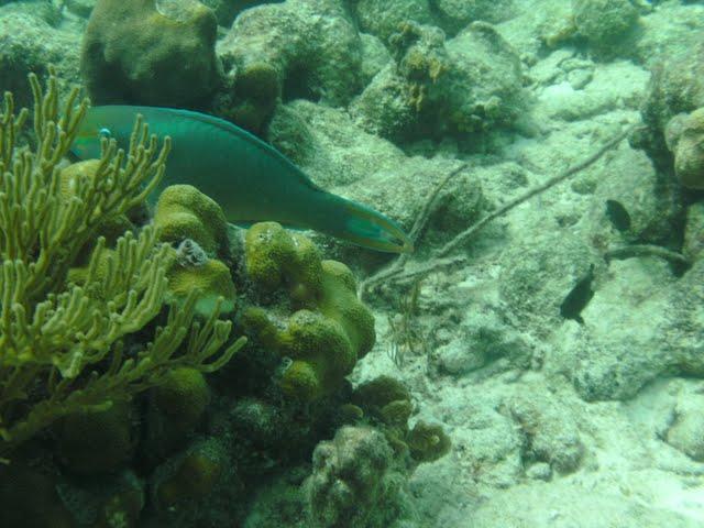 Bonaire 2011 - PICT0016.JPG